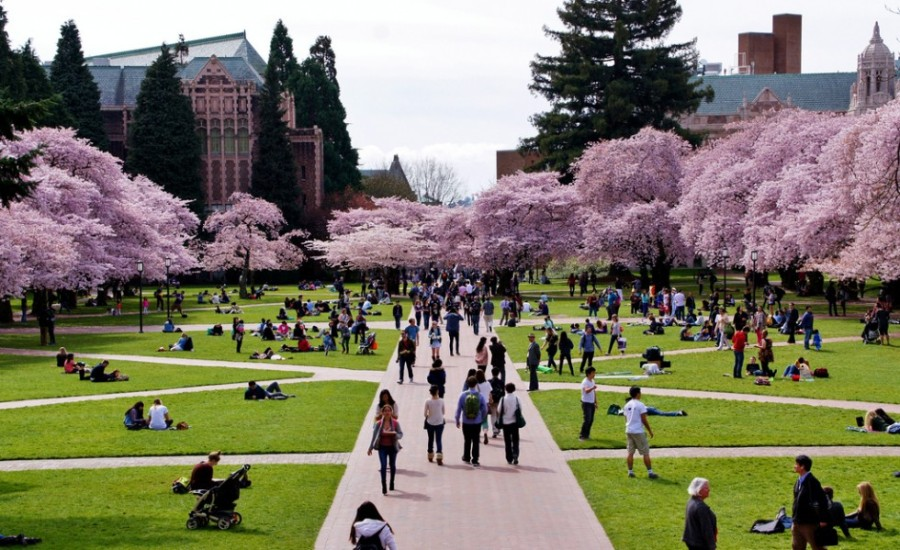 University-of-Washington-980x599.jpg
